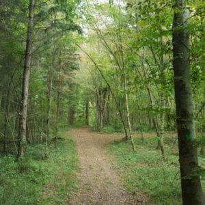Forêt en Meuse